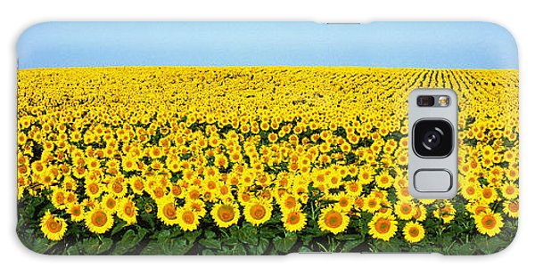 Expanse Galaxy Case - Sunflower Field, North Dakota, Usa by Panoramic Images