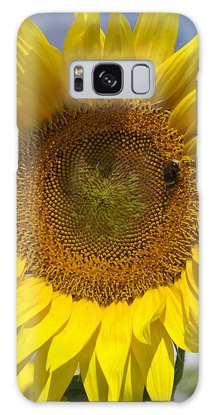 Helianthus Annuus Galaxy Case - Sunflower (helianthus Annuus) by Brian Gadsby/science Photo Library