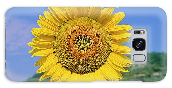 Helianthus Annuus Galaxy Case - Sunflower (helianthus Annuus) by Bruno Petriglia/science Photo Library