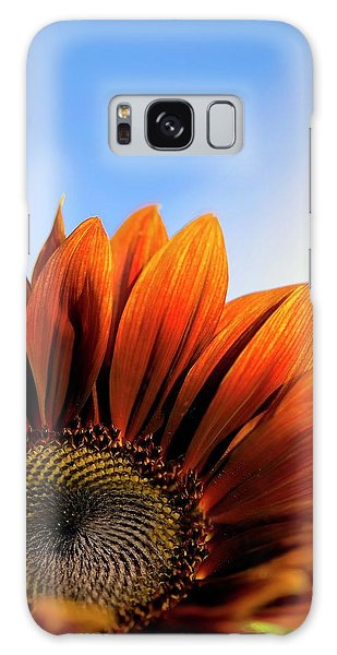 Helianthus Annuus Galaxy Case - Sunflower (helianthus Annuus) by Maria Mosolova/science Photo Library