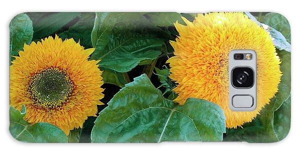 Helianthus Annuus Galaxy Case - Sunflower (helianthus Annuus Tuberosus) by D C Robinson