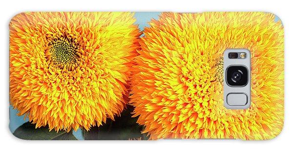 Helianthus Annuus Galaxy Case - Sunflower (helianthus 'teddy Bear') by Ann Pickford/science Photo Library
