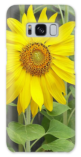 Sunflower Galaxy Case by Lisa Phillips