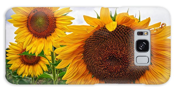 Sunflower Mama And Her Daughters  Galaxy Case