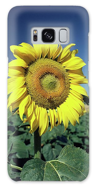 Helianthus Annuus Galaxy Case - Sunflower by Paul Harcourt Davies/science Photo Library