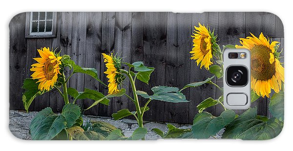 Sunflower Quartet Galaxy Case