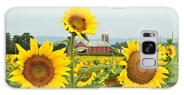 Sunflower Splendor #1 - Mifflinburg Pa Galaxy Case