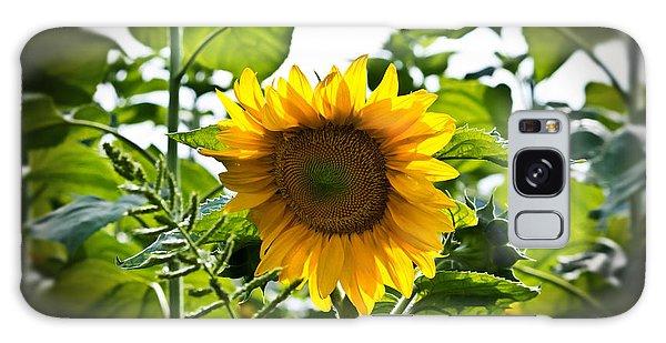 Sunflower Vignette Edges Galaxy Case