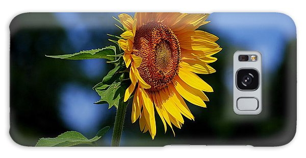 Sunflower With Honeybee Galaxy Case