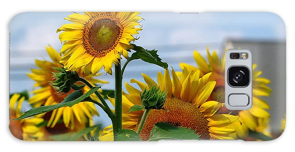 Sunflowers 1 2013 Galaxy Case