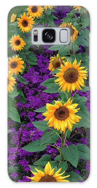 Helianthus Annuus Galaxy Case - Sunflowers And Verbena by The Picture Store/science Photo Library