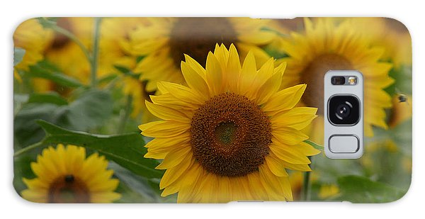 Sunflowers At The Farm Galaxy Case