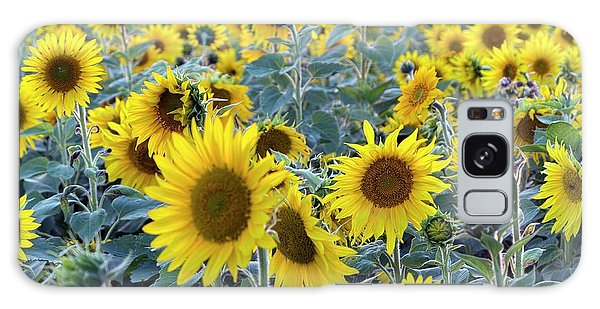 Helianthus Annuus Galaxy Case - Sunflowers (helianthus Annuus) by Daniel Sambraus
