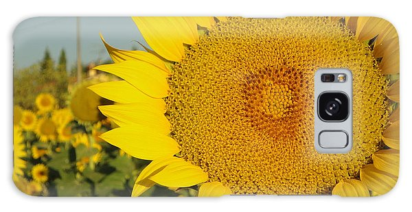 Sunflowers In Arezzo Galaxy Case