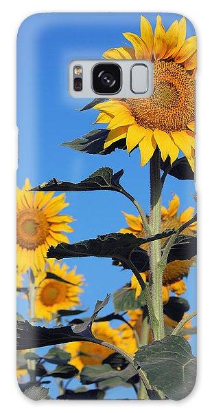 Sunflowers In Bloom Galaxy Case