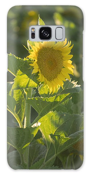 Sunlight And Sunflower 3 Galaxy Case