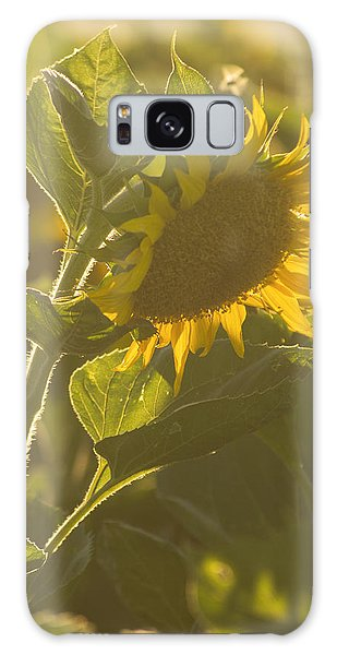 Sunlight And Sunflower Galaxy Case