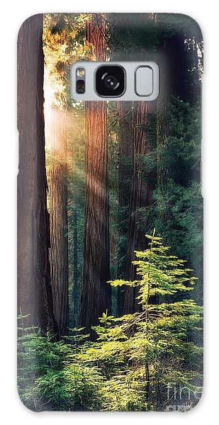 Pine Branch Galaxy Case - Sunlit From Heaven by Jane Rix