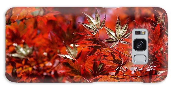 Sunlit Japanese Maple Galaxy Case