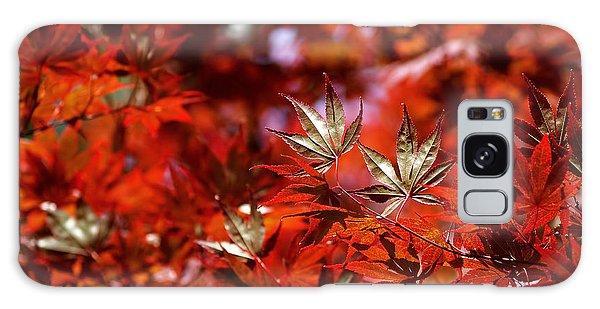 Sunlit Japanese Maple Galaxy Case by Rona Black