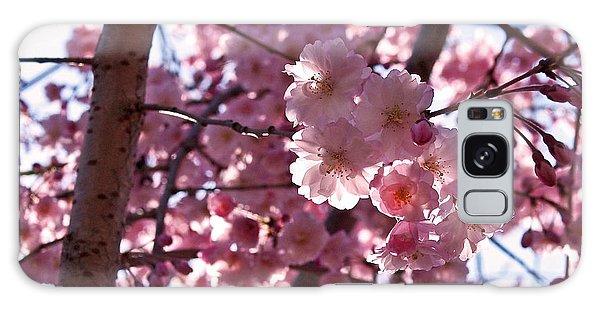 Sunlit Cherry Blossoms Galaxy Case