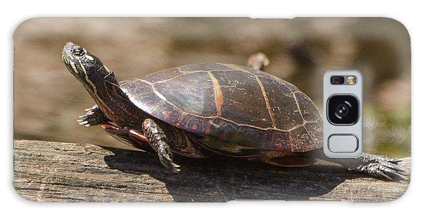 Brian Rock Galaxy Case - Sunning Turtle by Brian Rock
