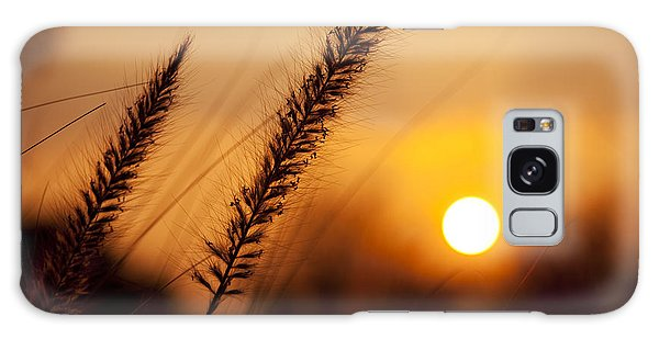 Sunset Fountain Grass Galaxy Case