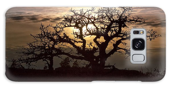 Sunset Oak Galaxy Case