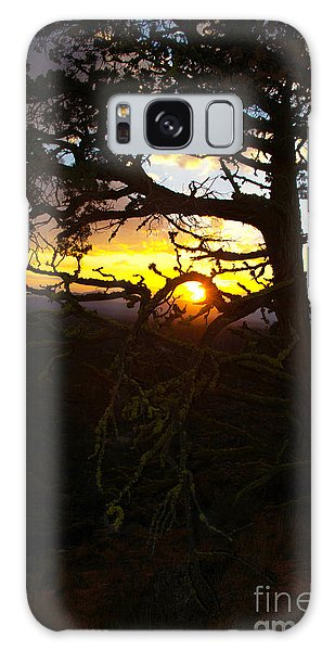 Sunset Through Branch Galaxy Case