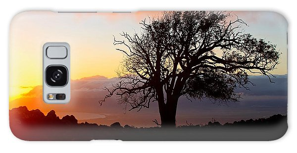 Sunset Tree In Maui Galaxy Case by Venetia Featherstone-Witty