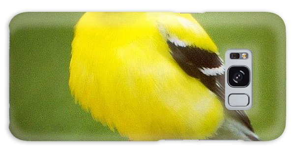 Super Fluffed Up Goldfinch Galaxy Case