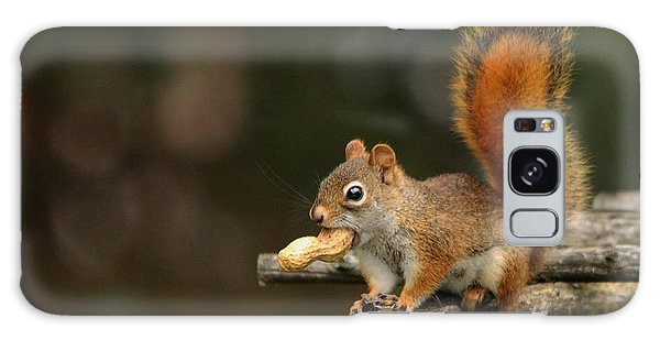 Surprised Red Squirrel With Nut Portrait Galaxy Case by Debbie Oppermann