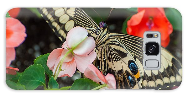 Swallow Tail Butterfly Galaxy Case