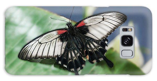 Galaxy Case featuring the digital art Swallowtail Butterfly by Mae Wertz