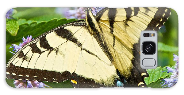 Swallowtail Butterfly On Anise Hyssop Galaxy Case