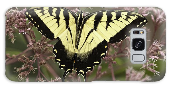 Swallowtail In Pink Galaxy Case