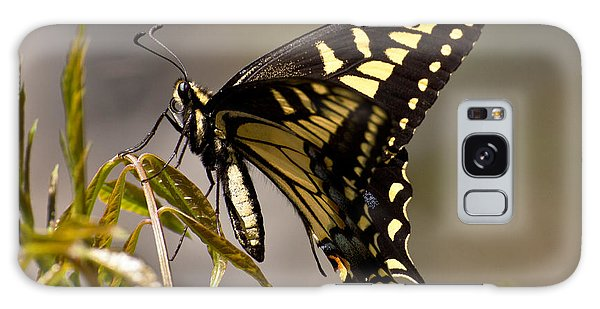 Swallowtail In Profile Galaxy Case
