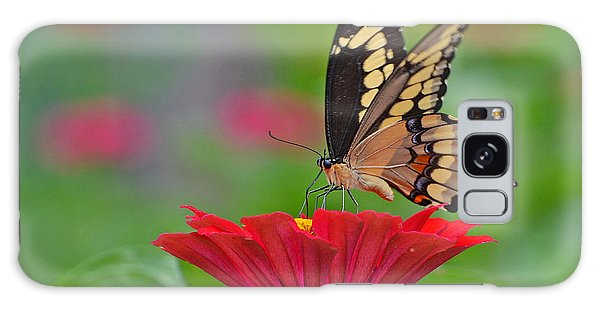Swallowtail On A Zinnia Galaxy Case by Rodney Campbell