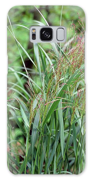 Metal Leaf Galaxy Case - Switch Grass by Adrian Thomas/science Photo Library