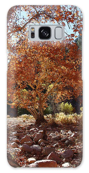 Sycamore Trees Fall Colors Galaxy Case by Tom Janca