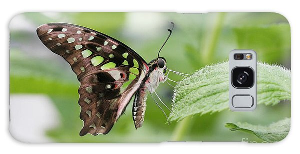 Tailed Jay Butterfly #3 Galaxy Case