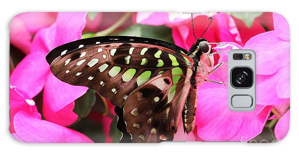 Tailed Jay Butterfly #4 Galaxy Case