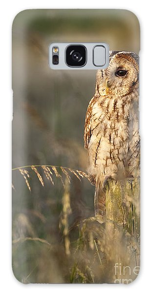 Owl Galaxy Case - Tawny Owl by Tim Gainey