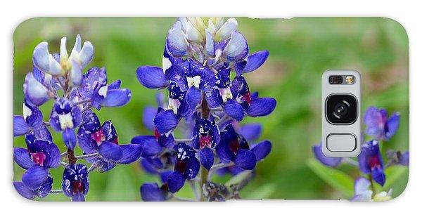 Texas Bluebonnets Galaxy Case by Debra Martz