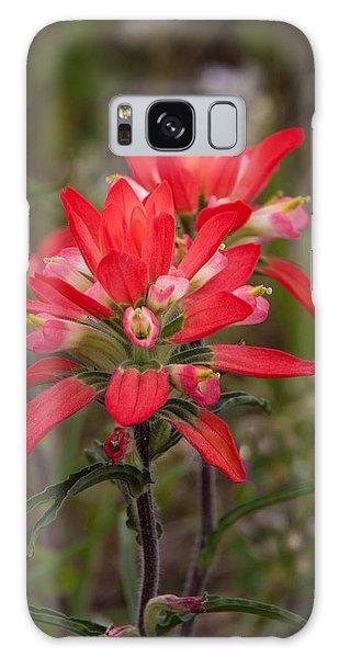 Texas Wildflower Galaxy Case