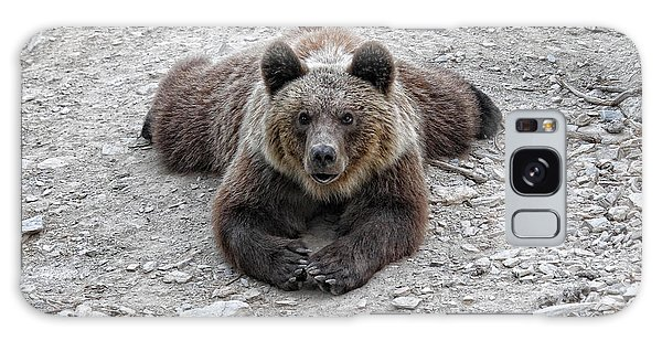 The Bear Resting Galaxy Case