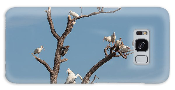 The Bird Tree Galaxy Case by John M Bailey
