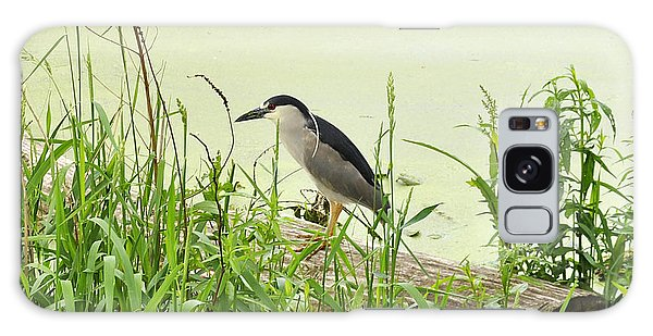 The Black-crowned Night Heron Galaxy Case