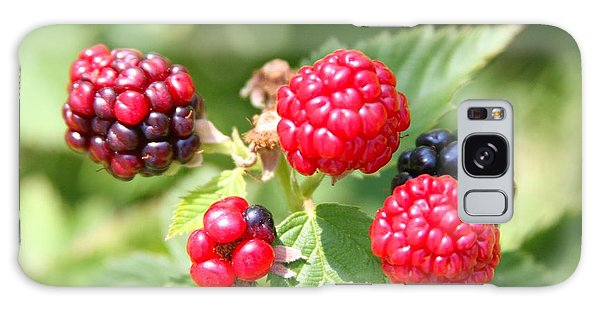 The Blackberries Are Coming-the Blackberries Are Coming Galaxy Case by Margaret Newcomb