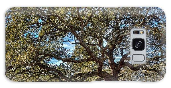 The Emancipation Oak Tree At Hu Galaxy Case